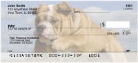 Romping English Bulldogs  Personal Checks | DOG-65