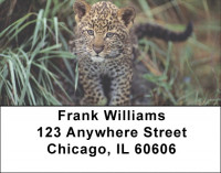 Lone Leopards Address Labels | LBEVC-68