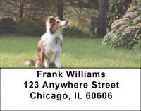 Sheltie Dog Address Labels