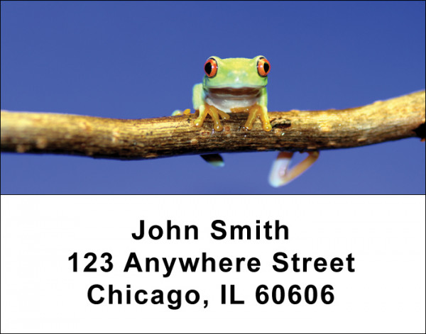 Frogs Address Labels | LBANI-09