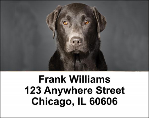 Black Labradors Address Labels