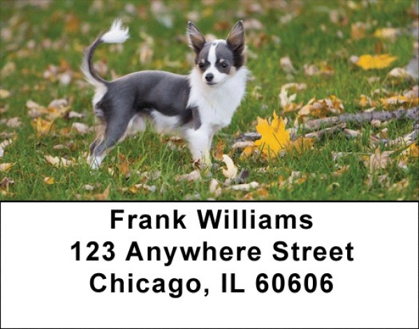 Charming Chihuahua Address Labels