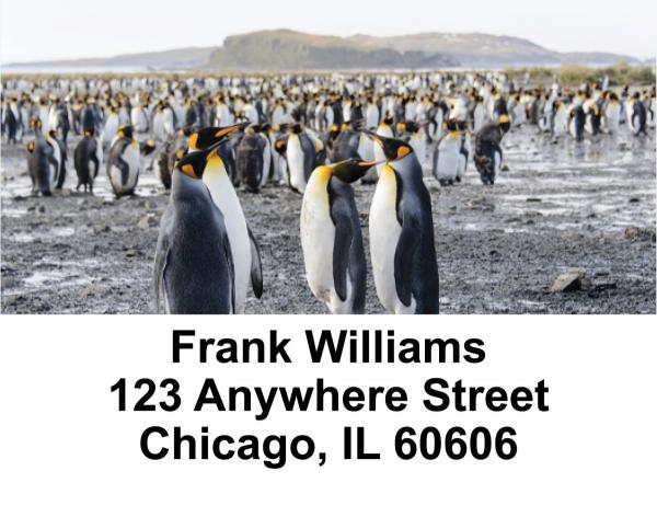 Penguin Checks Address Labels