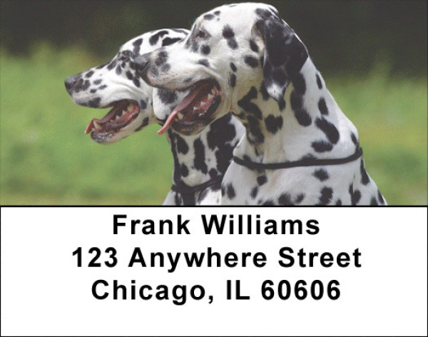 Dalmatian Dogs Address Labels