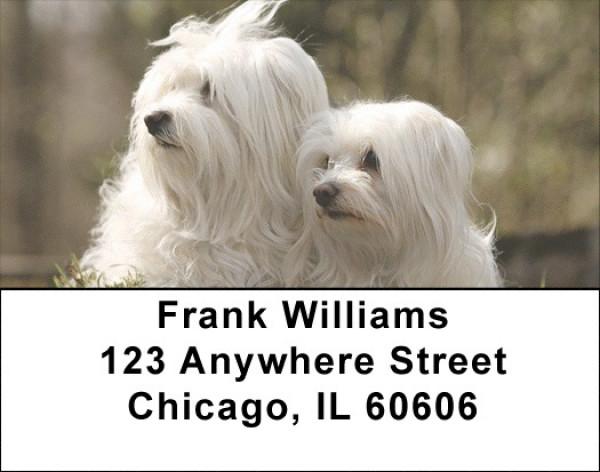 Maltese Dog Address Labels