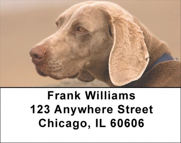 Weimaraner Dog Address Labels