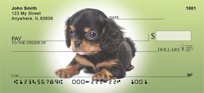 Cavalier King Charles Spaniel Puppy Checks