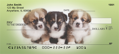 Corgi Puppies and Dogs Checks