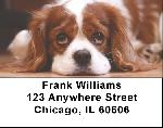 Cavalier King Charles Dogs Address Labels