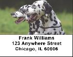 Dalmatians Address Labels