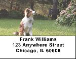 Sheltie Dog Address Labels