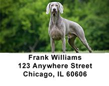 Weimariner Dog Address Labels